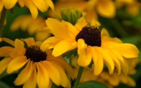 Обои макро, цветы, природа, жёлтый, фото, фон