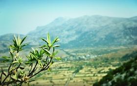 Картинка листья, миндаль, Крит, природа, горы, Греция, ветка
