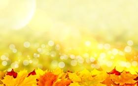 Картинка листья, солнце, лучи, colorful, autumn, leaves, осенние