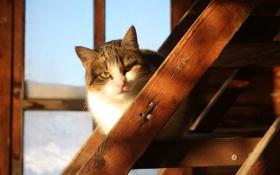 Обои кошка, дом, деревня