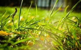 Картинка поле, трава, macro