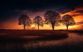 Обои TREES, небо, деревья