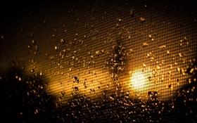 Обои солнце, капли, макро, свет, клетка, Raindrops