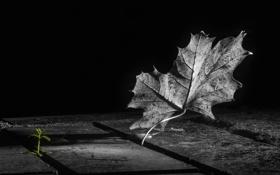 Обои осень, свет, лист, доски, росток