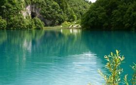 Обои лес, лето, озеро, фото, скала
