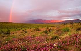 Картинка трава, закат, цветы, холмы, радуга, луг, кусты