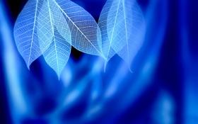 Обои листья, прожилки, Blue syndrome