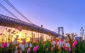 Обои New York, Williamsburg Bridge, East River Park