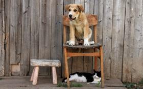 Картинка кошка, друзья, собака