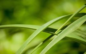 Обои зелень, Трава, кусты, nature, macro, травинки