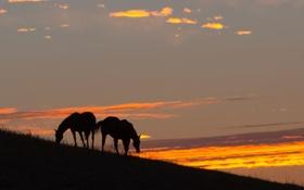 Обои кони, закат, природа