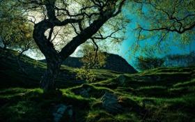 Обои деревья, солнце, фото, природа, склон, небо, гора