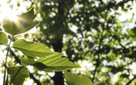 Картинка зелень, лес, листья, макро, свет, природа, зеленый