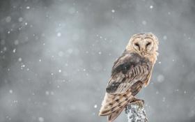Картинка снег, сова, ветка, ищу