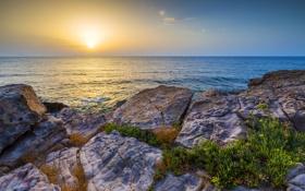 Картинка море, небо, трава, камни, побережье, горизонт, солнце.рассвет