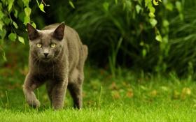 Обои трава, глаза, прогулка, охотник