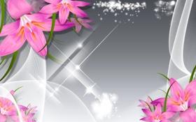 Обои цветы, коллаж, лилия, вектор, лепестки