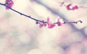 Картинка цветы, природа, ветка, цветение, nature, blossom, flowers