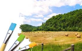 Обои пейзаж, трава, небо, зелень, краска, сено, кисти