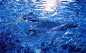 Картинка арт, Christian Riese Lassen, вода, дельфины, море