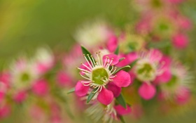 Обои сад, весна, дерево, природа, цветы