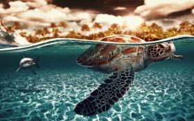 Картинка черепаха, акула, под водой