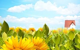 Обои поле, небо, солнце, облака, цветы, жёлтый, подсолнух