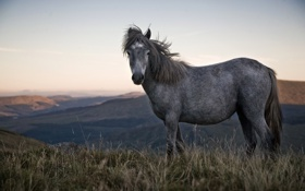Обои горы, лошадь, пони