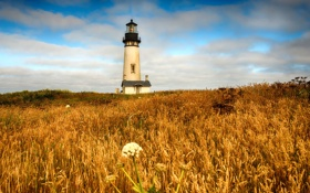 Обои небо, пейзаж, природа, lighthouse, Newport, Yaquina head light