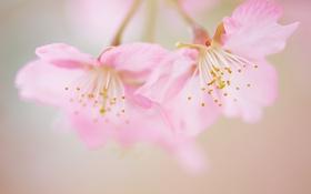 Обои цветы, стебли, лепестки, боке