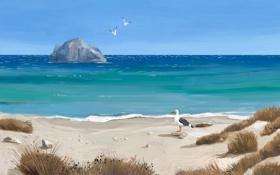 Картинка песок, море, трава, птицы, скала, берег, чайки