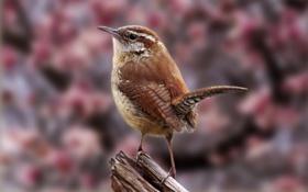 Обои птица, птичка, пернатое создание