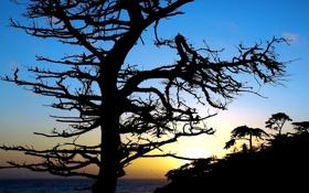 Обои море, небо, закат, дерево, силуэт