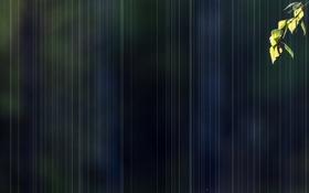 Картинка листья, фон, ветка