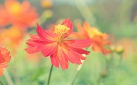Картинка макро, цветы, природа, лепестки, nature, flowers, macro