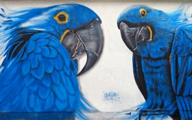 Обои стена, граффити, попугай, Graffiti