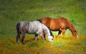 Обои зелень, трава, солнце, обработка, лошади, пастбище, луг