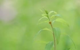 Картинка зелень, листья, макро, природа, растение, жук, стебель