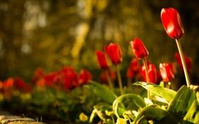 Обои природа, свет, цветы
