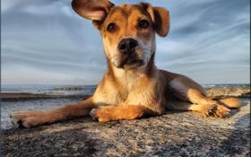Обои море, друг, солёный пёс