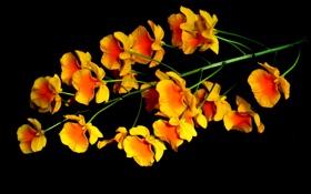 Картинка цветок, природа, фон, растение, соцветие