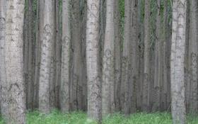 Картинка лес, деревья, природа, стволы