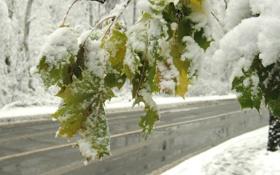 Обои листья, снег, дорога