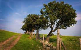 Картинка зелень, лето, трава, деревья, природа, фото, дерево