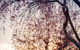 Картинка листья, дерево, свечи, боке