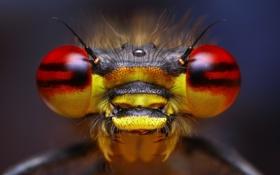 Обои глаза, насекомое, усики, боке