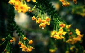 Обои макро, природа, растения, ветка, листья. цветы