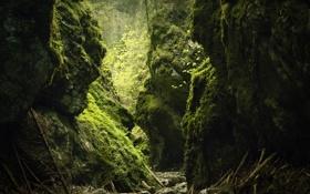 Обои зелень, камни, заросли, палки, мох, ущелье, лианы