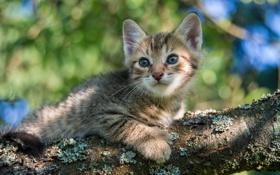 Картинка глаза, взгляд, дерево, котёнок, котэ