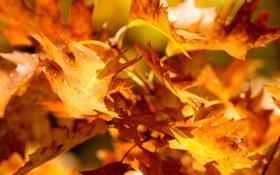 Картинка листья, осень, ветки, деревья, природа, желтые